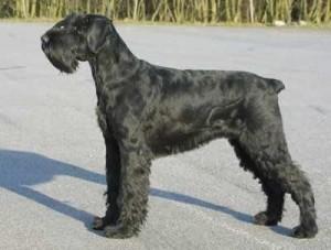 Foto: www.i-love-dogs.com